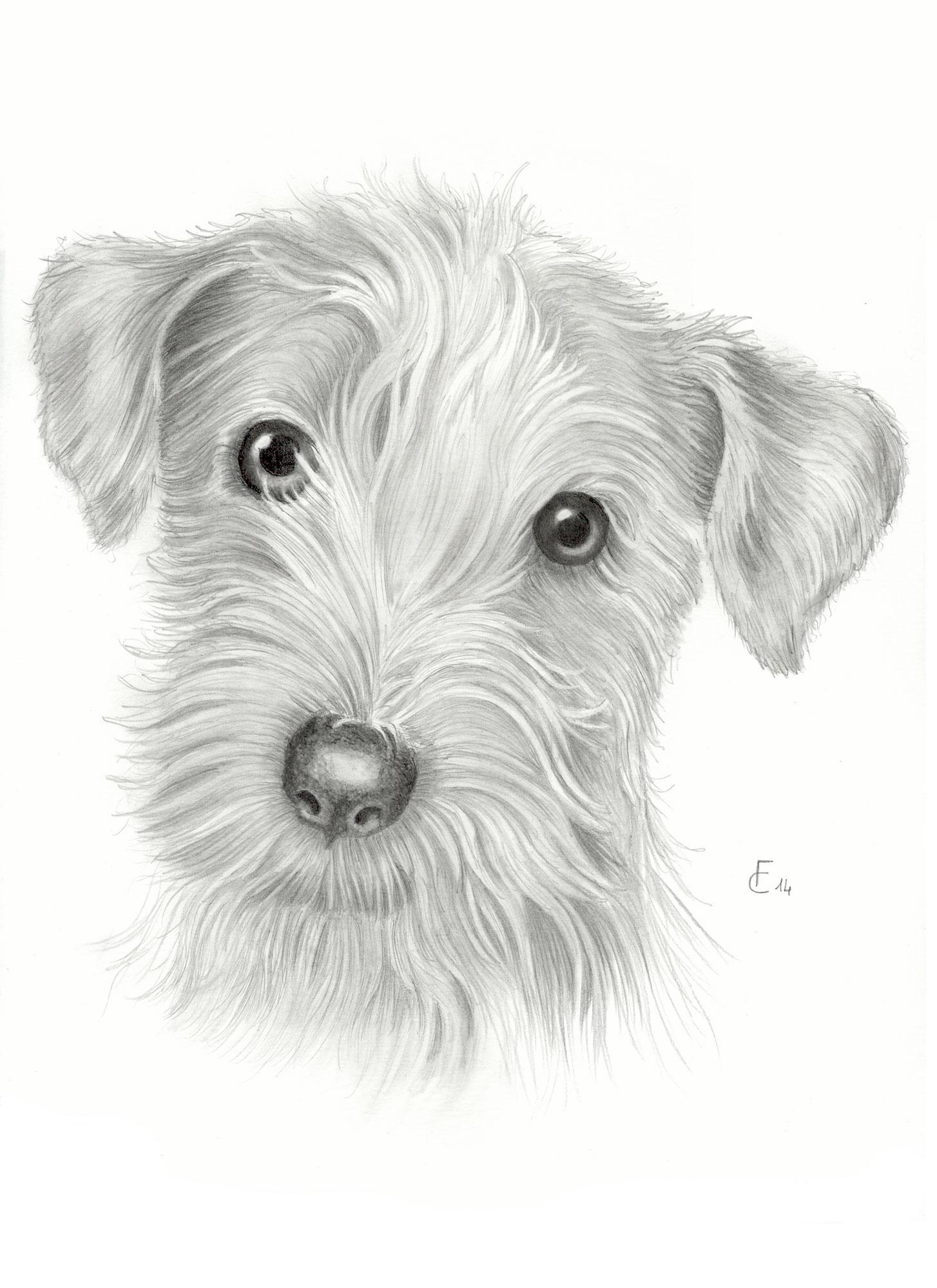 Disegni a matita di animali for Disegni a matita di cani