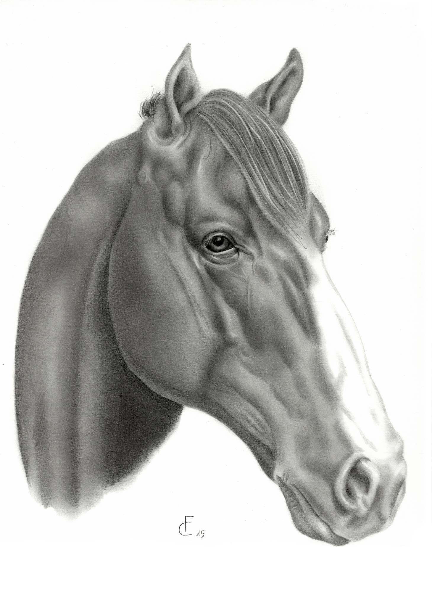 Disegni di cavalli jf78 pineglen for Disegno cavallo stilizzato