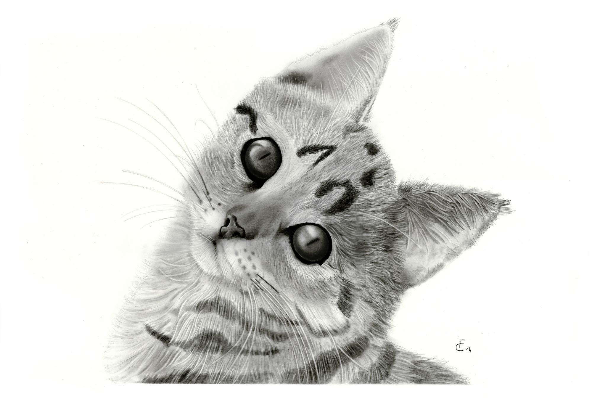 Lusso disegni colorati di gatti belli migliori pagine da for Immagini di cavalli da disegnare
