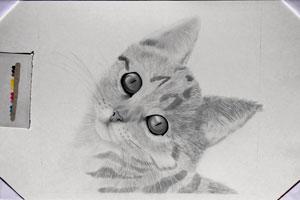 Disegno gatto a matita work in progress del disegno for Disegno gatto facile