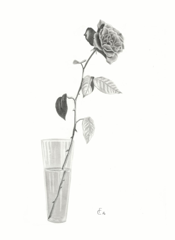 Conosciuto Disegni a matita di fiori, paesaggi, natura MU62